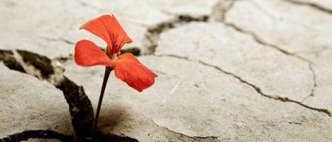 La capacità di adeguarsi al cambiamento: la migliore forma resilienza