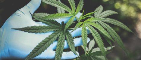 Chiarimenti Assessoriali su rimborsabilità a carico del S.S.R. della Cannabis ad uso medico